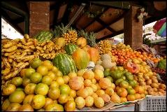 marcela anzola tlc europa cancillería frutas exóticas