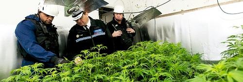 augusto perez drogas paz incautacion marihuana