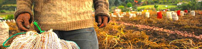 imagen de las manos de un papero en plena cosecha, con un bulto de papa y el cultivo a su espalda