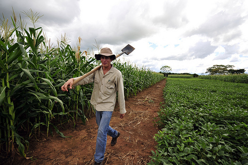 Cultivos de soya y de maíz cerca a Villavicencio, capital del departamento del Meta.