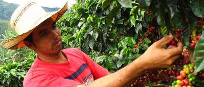 Caficultura, paz y competitividad en Colombia