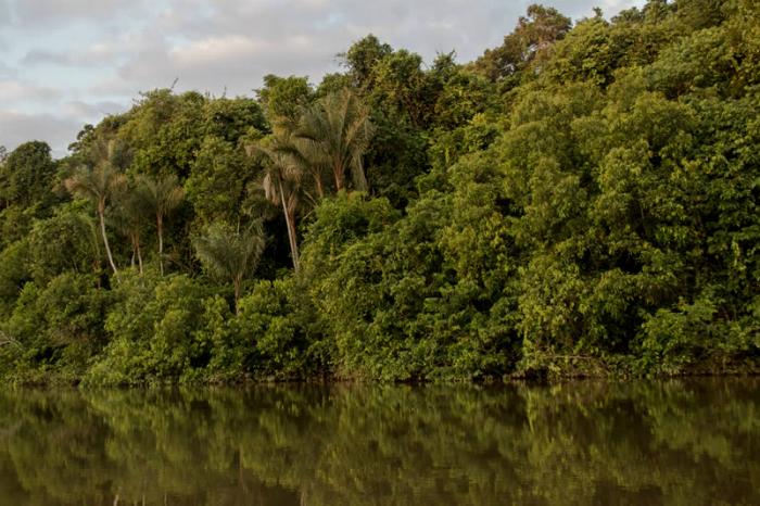 Los bosques en el Amazonas