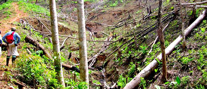 Deforestación.