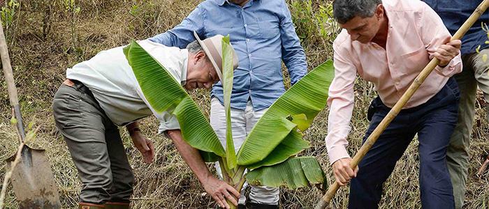 Presidente Juan Manuel Santos en el programa de sustitución voluntaria de cultivos ilícitos.