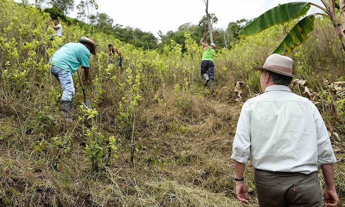 Presidente Juan Manuel Santos supervisando la erradicación de cultivos de coca.