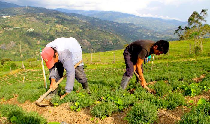 Ruralidad en Colombia.