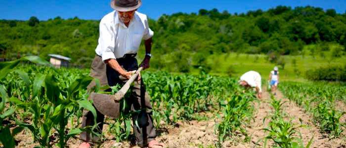 El mayor problema de los agricultores es que no cuentan con garantías.