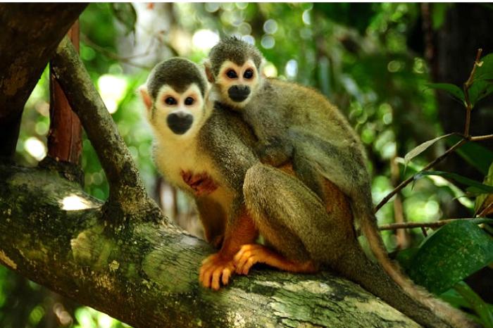 El parque fue incluido en la lista de la UNESCO como patrimonio mixto de la humanidad, lo que representa un compromiso del Estado colombiano por su preservación.