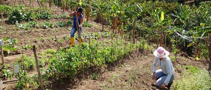 Una de las propuestas es brindar seguridad jurídica a la propiedad rural.