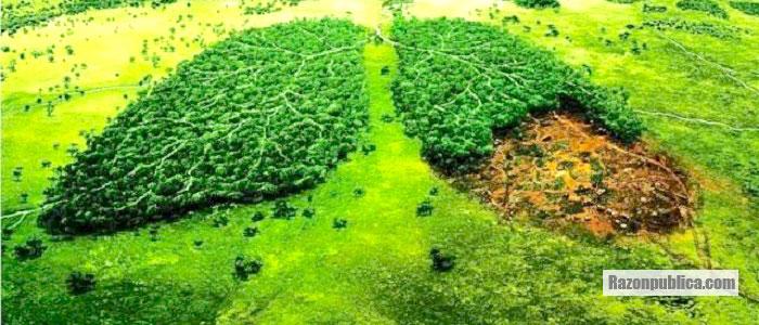 Los problemas ambientales deben ser esenciales en las políticas públicas.