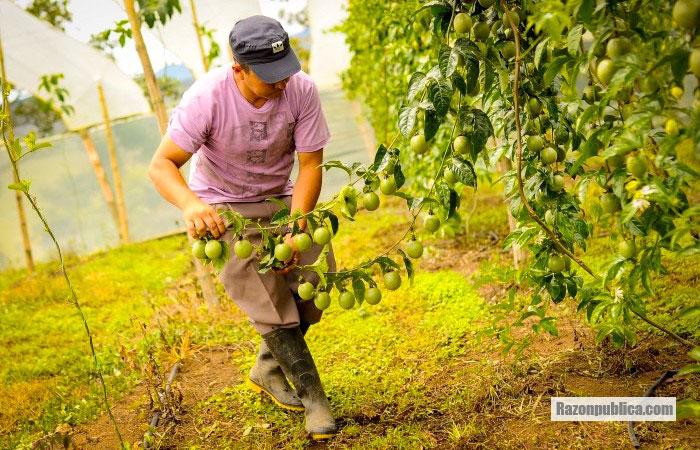 La concentración de la tierra en Colombia sigue siendo un problema grave.