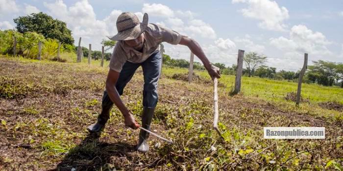 La Reforma Rural y en particular los PDETS se ahogan en medio de burocracia y falta de presupuesto.