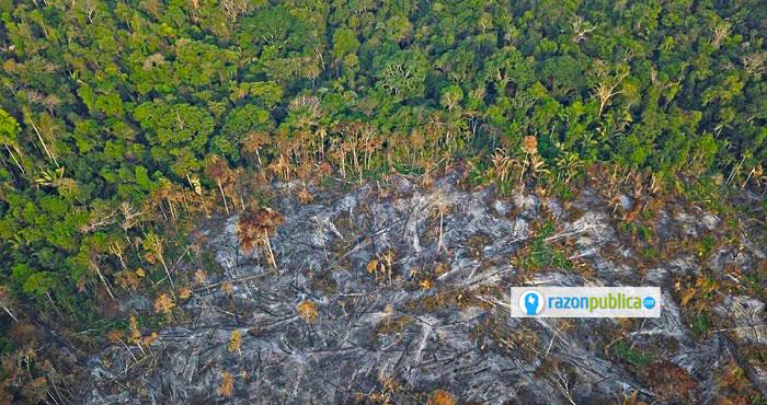 WWF Amazonía consumida por el incendio.