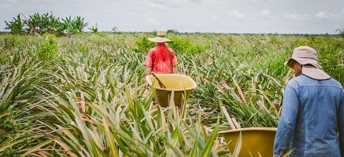 Mientras la economía colombiana creció un 3 por ciento, el agro apenas creció 1.5 por ciento.